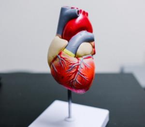 5 conseils pour faire baisser son cholestérol et préserver sa santé cardiovasculaire